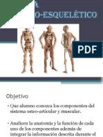 sistemamusculoesqueletico (4)