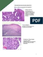 A.histopatología Digestiva 2009
