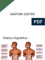 Anatomi Gaster