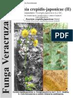 143_Puccinia Crepidis-japonicae (II)