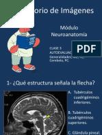 Repaso Neuro 1 Final.