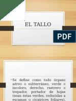 EL TALLO.pptx