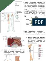9.- Inmune 2014.ppt