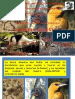 PRESENTACIÓN_FAUNA SILVESTRE.pptx