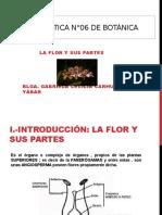 001 Botanica - Flor