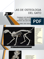 Atlas de Osteologia Del Gato