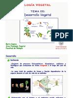 Figuras_05._Desarrollo