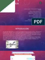 Biomoléculas y bioelementos.pptx
