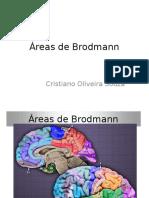 Areas de Brodmann 1