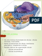 Aula 1citoplasma_ppt.ppt