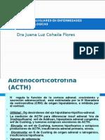 EXAMENES DE LABORATORIO - Dra Cohaila