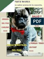 Periodico Ingrid