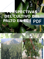 Perspectivas del cultivo del palto.pptx