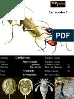 13 - Artrópodos 2.pdf