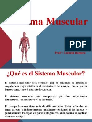 Presentación 1 Musculo Músculo Tórax