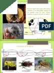 Cabezas de Insectos