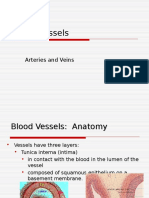 BIO 34 - Lecture 3 (Blood Vessels).ppt