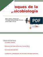 Enfoques Fundamentales de La Psicobiología