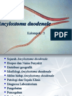 Ancylostoma duodenale 2.ppt