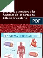 Sistema Circulatorio, 5to