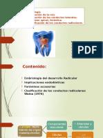Presentacion Embriologia Radicular