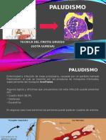 Exposicion de Paludismo y Gota Gruesa