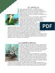 5 Leyendas de El Salvador Famosas