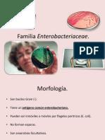 5. Familia Enterobacteriaceae