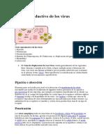 Ciclo Reproductivo de Los Virus