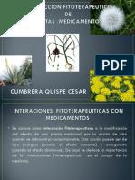 expo plantas.pdf