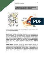 04.sinapse.pdf