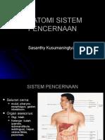 2. ANATOMI SISTEM PENCERNAAN0809.ppt