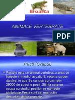 ANIMALE VERTEBRATE.ppt