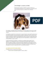 Características Del Perro Beagle
