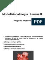 Pregunta Práctica MFPH II
