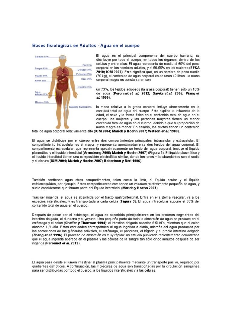 Bases Fisiológicas en Adultos
