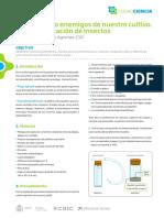 Identificación de Insectos