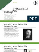 Neisseria y Moxarella Catarrhalis