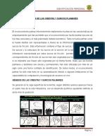 1 Trab. Practico Genesis de Las Crestas y Surcos Palmares