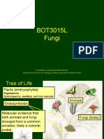 10--Fungi