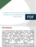 Impacto de Plantio Directo de Tomate - Emilia Maria Gaveta