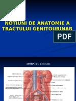 notiuni_anatomie_renala