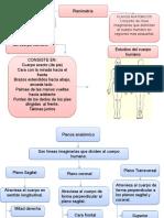 Planimetría, tejido epitelial y muscular-2