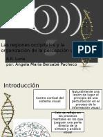 Las regiones occipitales y la organización de la.pptx