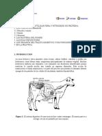 Digestión en La Vaca Lechera