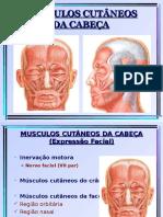 Musculos Cabeça e Pescoco Slides
