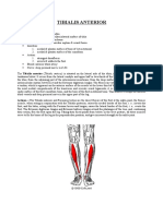 Tibial is Anterior
