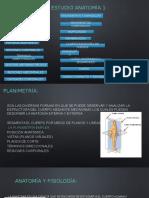 Guía de Estudio Anatomia