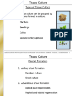 TYPES OF TISSUE CULTURE.pdf