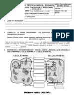 Evaluacion de Biologia Ciclo III -Estructura Celular